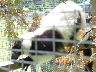 Zoo Papanack
